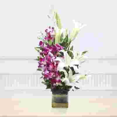 Beautiful Orchidaceous